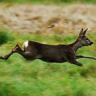 running free by Alan Mattison