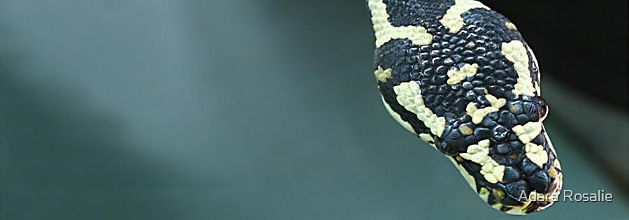 Python by Adara Rosalie