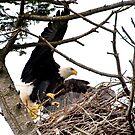 Renovating the Nest by David Friederich