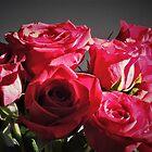 Rote Rose Haufen von annAHorton