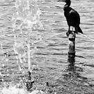Birds at the Lake  by LeonidasBratini