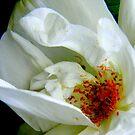 The Rose ! by Elfriede Fulda