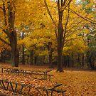 Forgotten Park by Virginia Shutters