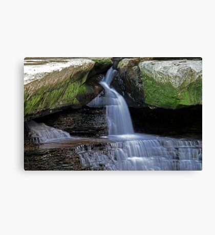 Finding The Way Through Canvas Print