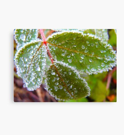Icy Frosting.. Leaf. Canvas Print
