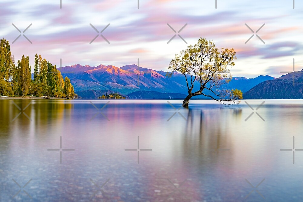 That Wanaka Tree by Adrian Alford Photography