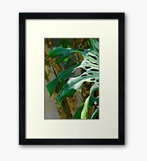 Shadow Leaf Framed Print