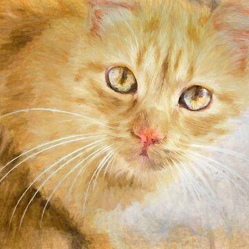 Marmalade cat by missmoneypenny