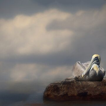 Pelican at rest by kdxweaver