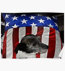 Chloe Resting on the Flag Pillow Poster