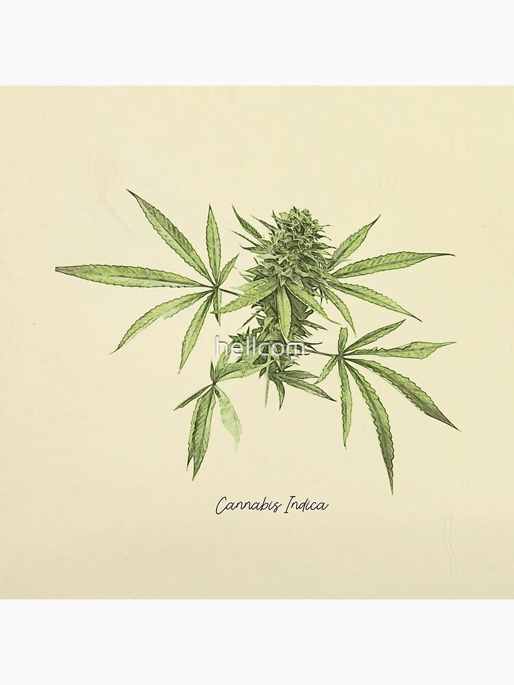 Vintage botanical print - Cannabis by hellcom