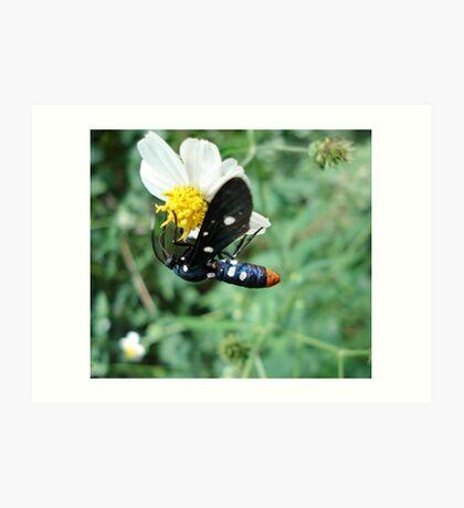 Polka-dotted Wasp Moth Art Print