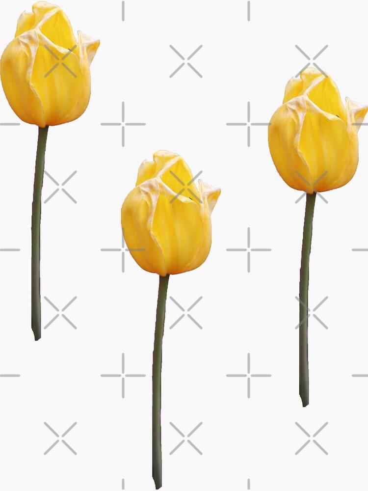 Yellow Tulip by STHogan