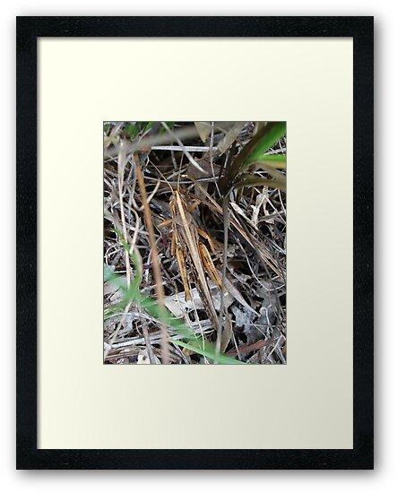 Grasshopper incognito by May Lattanzio