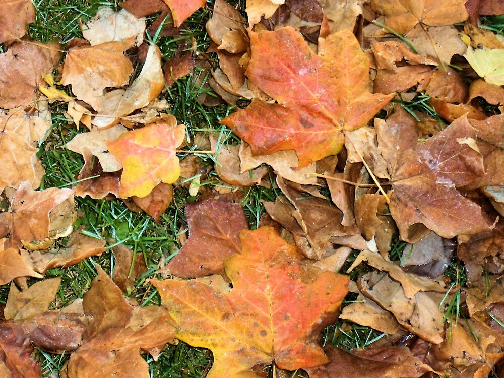 Fall of Mapleshade  by John McCloskey