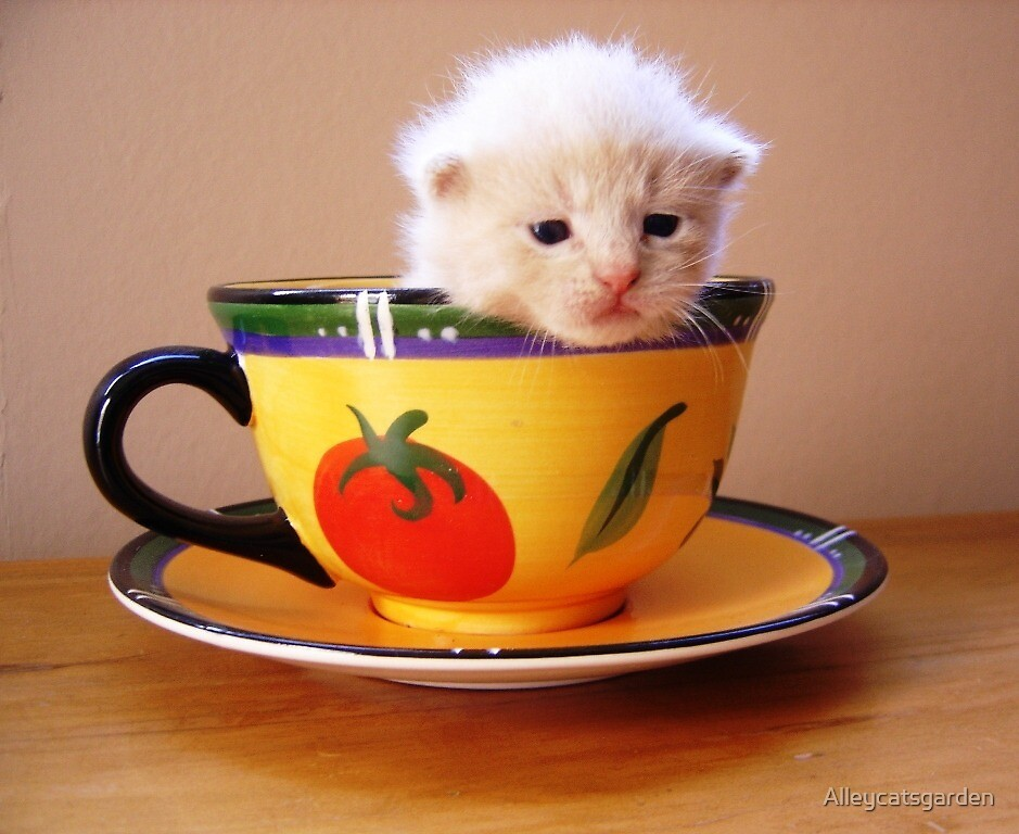 Cuppa anyone? by Alleycatsgarden