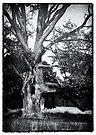 Spooky tree by Sara Sadler