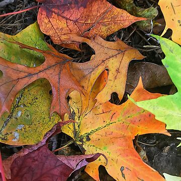 Early October Leaves 2 by bloomingvine