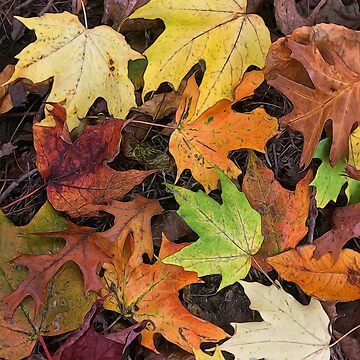 Early October Leaves 3 by bloomingvine