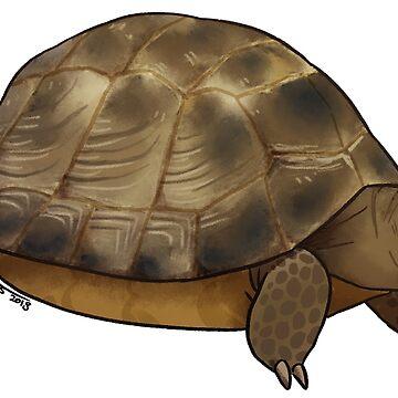Russian Tortoise: Harold by petakov-kirk