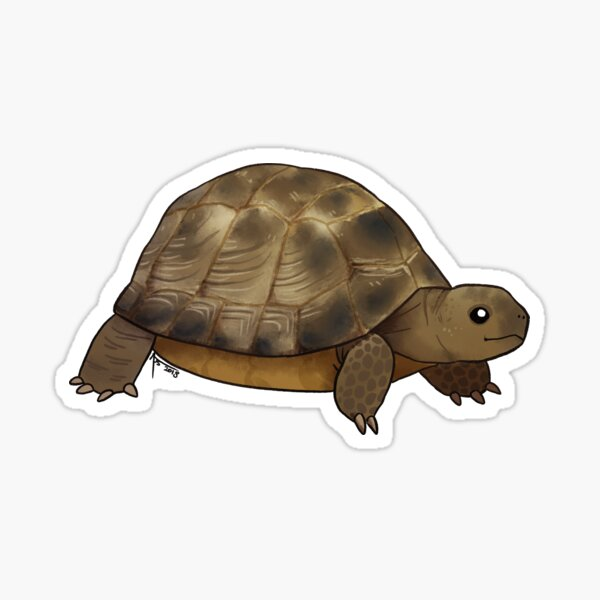 Russian Tortoise: Harold Sticker