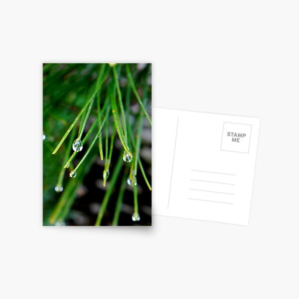 Merry merry droplets Postcard