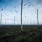 Hop Fields by Alex Wise