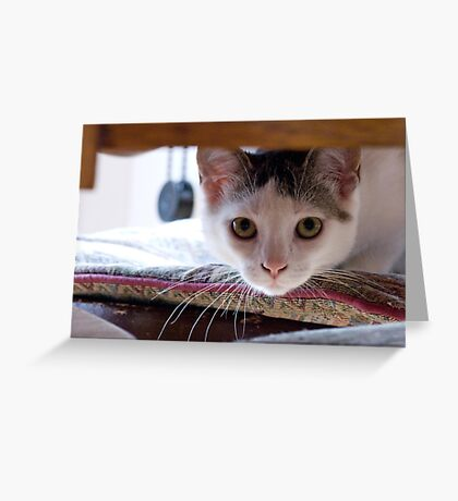 Georgie the kitten Greeting Card