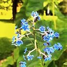 forget me knots flowers by little1sandra
