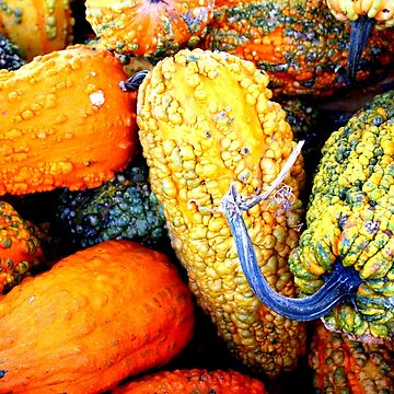 Ornamental Gourds by Cynthia48