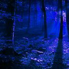 Moonlit Forest by Richard-Gary Butler