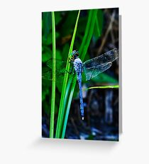Male Eastern/Common Pondhawk  Greeting Card