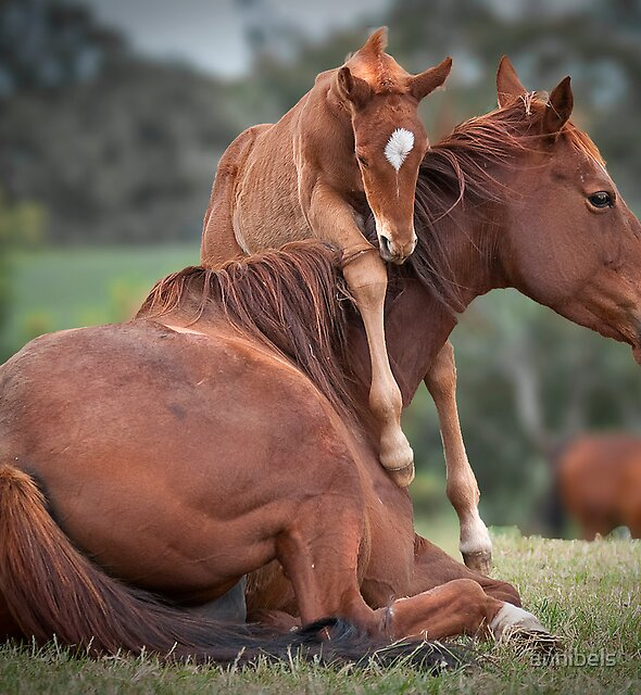 Love You Mum by annibels
