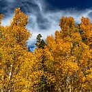 Bishop Curtain of Fall Color by photosbyflood