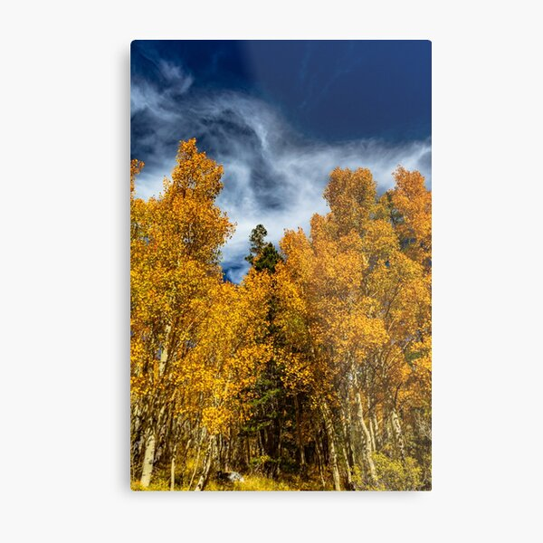 Bishop Curtain of Fall Color Metal Print