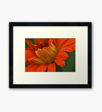 Red and Yellow Petals Framed Print