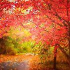 Glorious Foliage On The Rail Trail by Anita Pollak