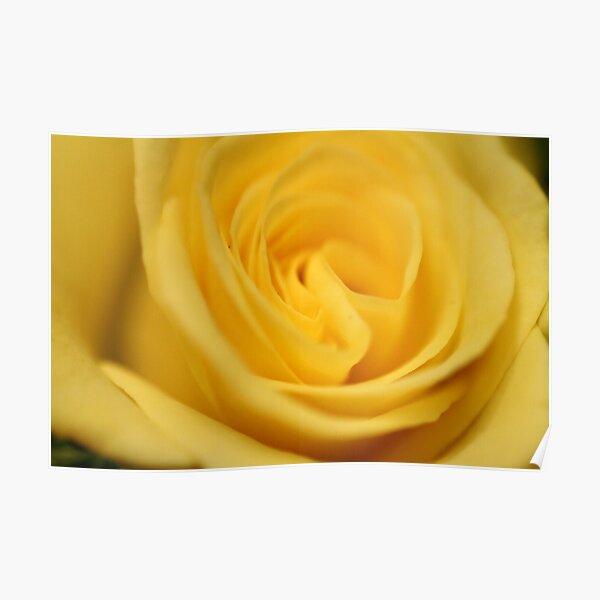 Flower: Yellow Rose I Poster