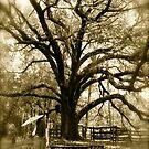 Tree by KatarinaSilva