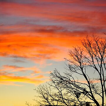 Tree Sillhouette and Sunset by funkydive