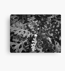 Nature's Texture & Patterns , No. 1 Canvas Print