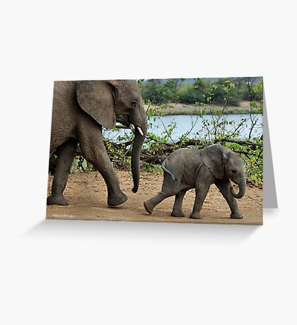 I CAN'T WALK FASTER ! - THE AFRICAN ELEPHANT – Loxodonta Africana Greeting Card