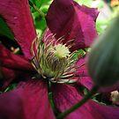 Magenta Bloom by Fiery-Fire