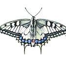 Swallowtail Butterfly by Liz Mattison