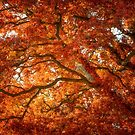 Autumn and Oak Color by Philippe Sainte-Laudy
