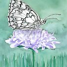 The Marmoris - Marbled White Butterfly  by Liz Mattison
