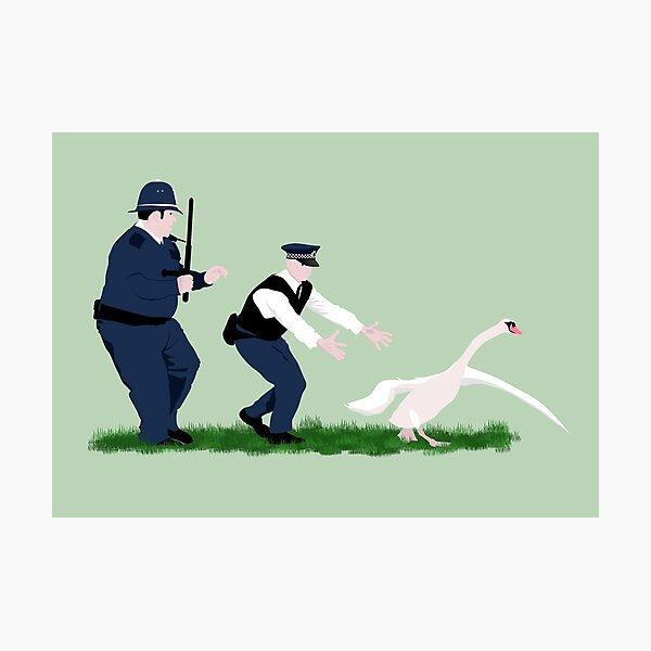 Swan cops Photographic Print