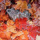 Maple Leaves by Veikko  Suikkanen