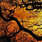 Sunset Tree in Africa by pinkarmy25