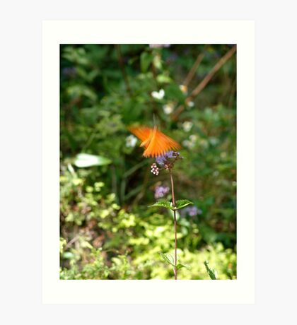 Beautiful Blur - the Butterfly as Abstract Art Art Print